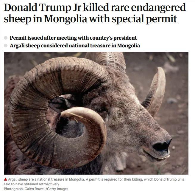 SheepKiller1.jpg